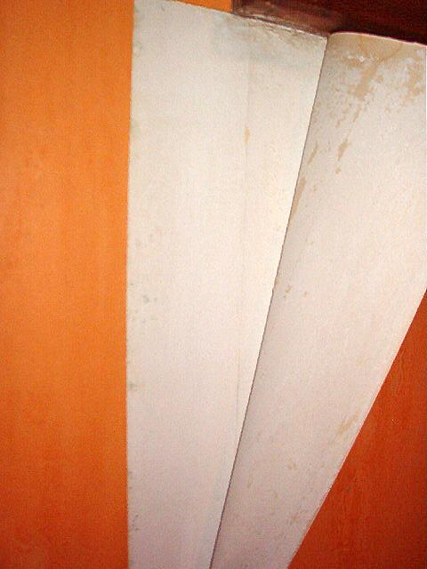 moisissure papier peint